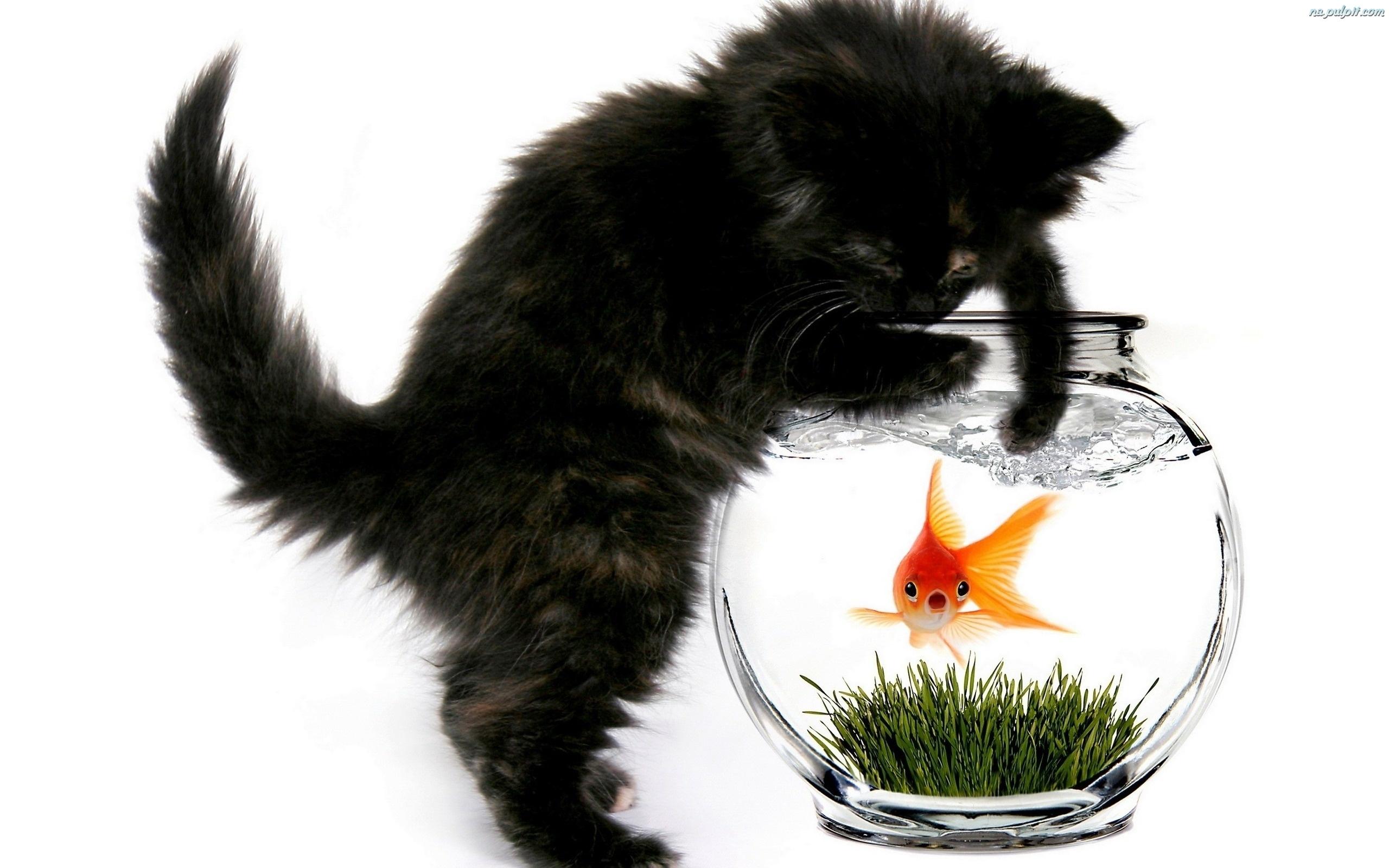 Rybka kotek akwarium na pulpit for Fish video for cats
